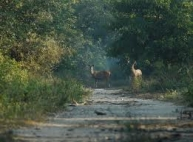 Chilla Wildlife Sanctuary