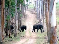 Muthanga Wildlife Sanctury