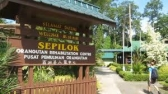 Sepilok Rehabilition Centre